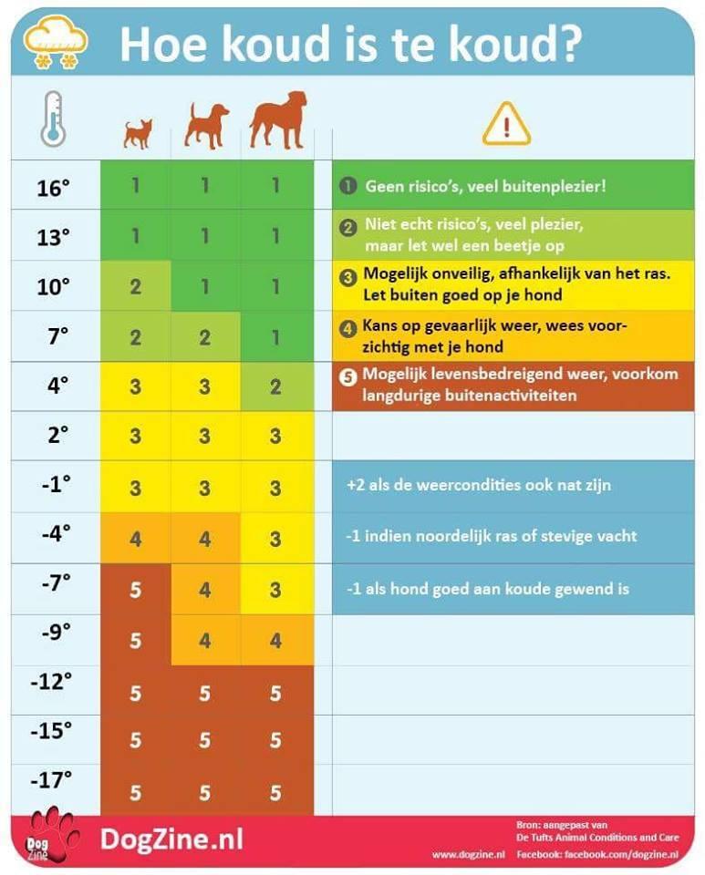 Wanneer is het TE koud voor je hond?