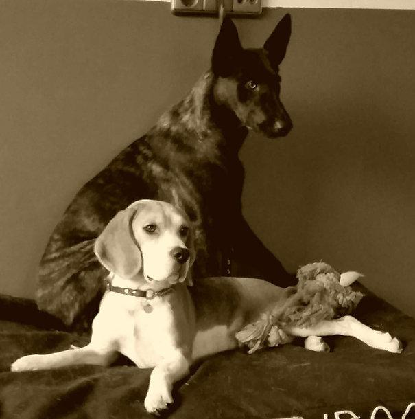 Zola en Cooper.jpg