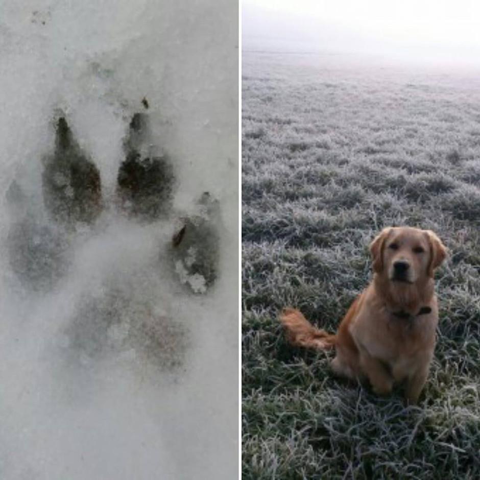 5 Wintertips van DogSkills.