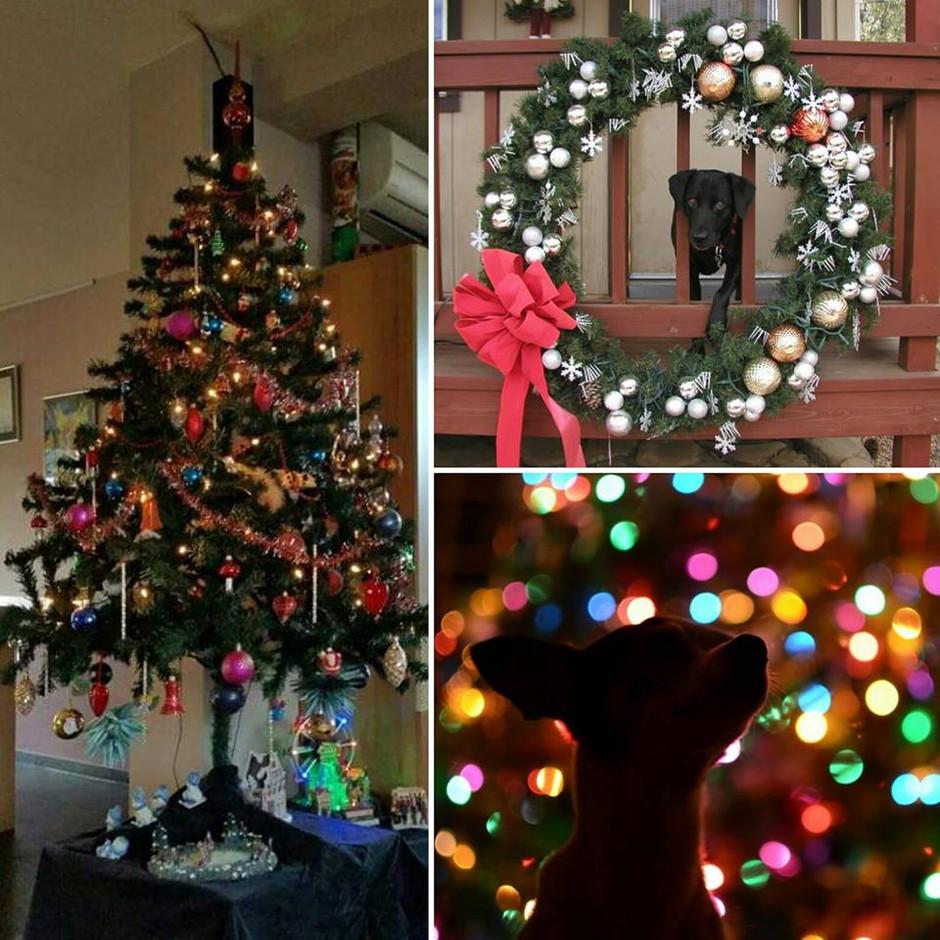 De kerstboom opzetten met de hond.