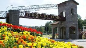Flores da Cunha: Os vinhos da APROMONTES