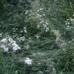 Doug Wieselman releases new single Blodeuwedd