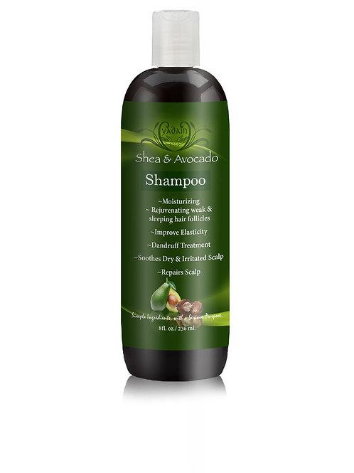 Shea & Avocado Signature Shampoo (8oz.)