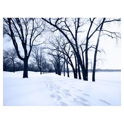 Deep Footprints in Snow Between Trees  Framed Art on Canvas  by Pharmore Ltd