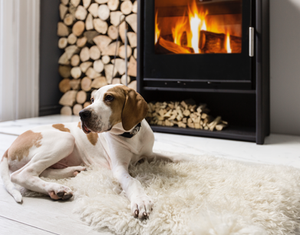 The ARADA i600 Slimline Freestanding wood burning stove and a dog sitting on a sheep hide in front of it
