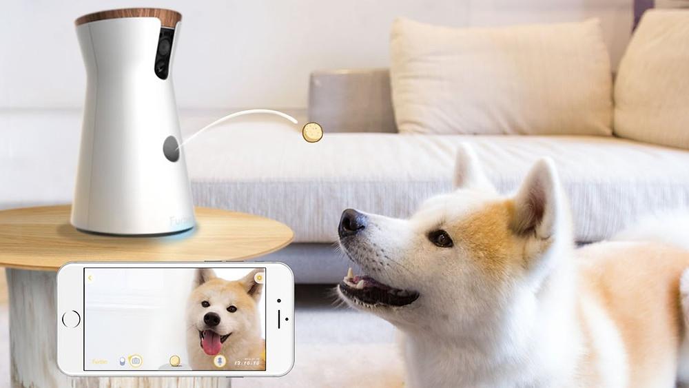 Furbo dog camera and treats