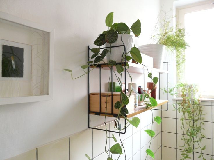 plants hanging from a shelf in the bathroom