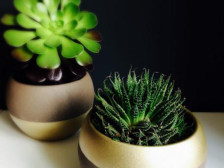 DIY - Dip Dye planters