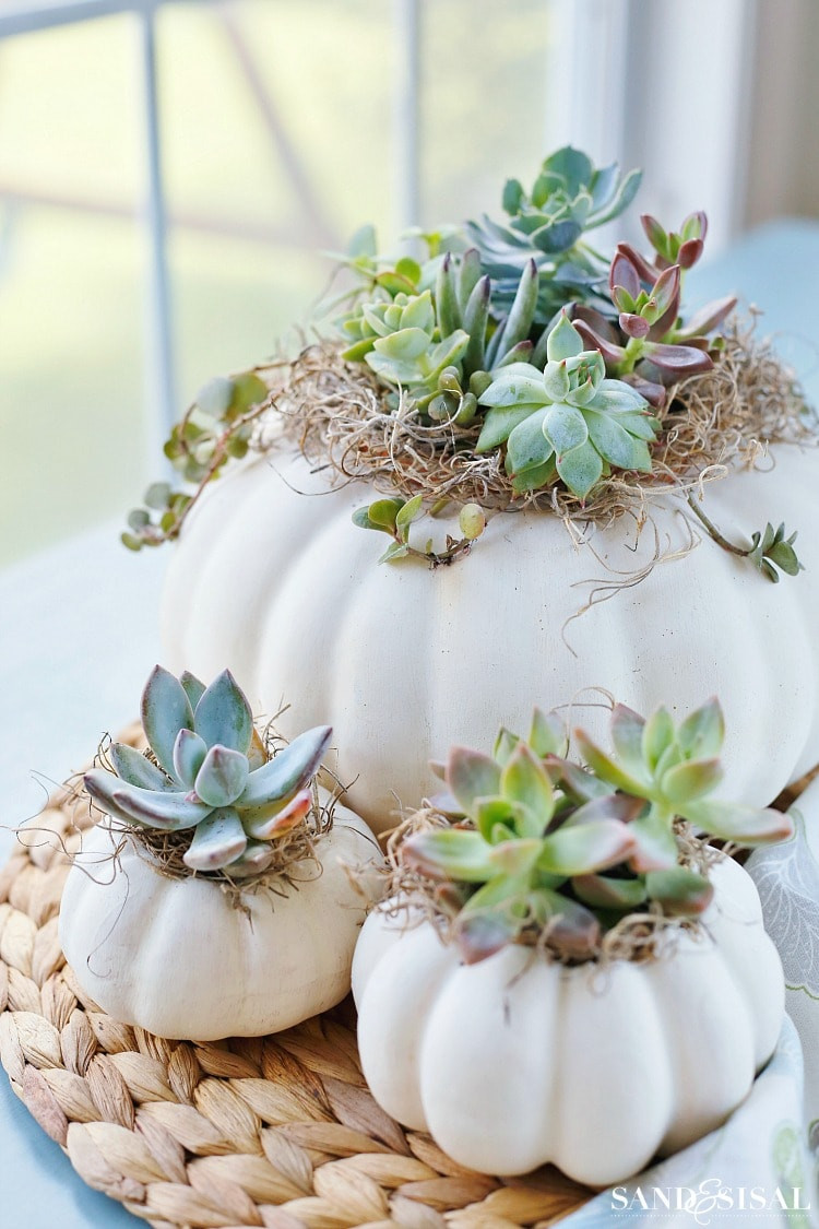 10+1 ELEGANT decor ideas with pumpkins succulents inside white pumpkin for halloween