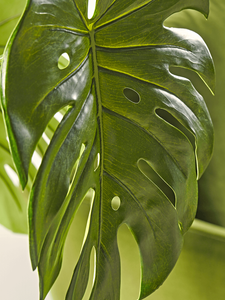 Faux Monstera close up
