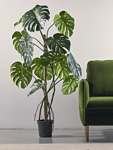 potted faux Monstera