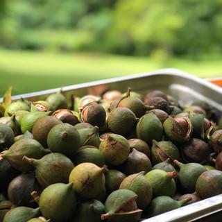 Husked macadamia nuts
