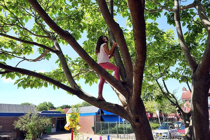 Groene Schoolplein Vuurvogel Spijkenisse