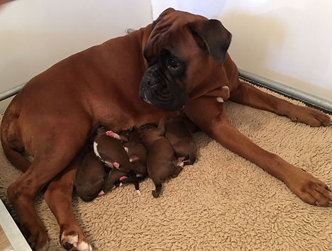 Norah en pups.jpg