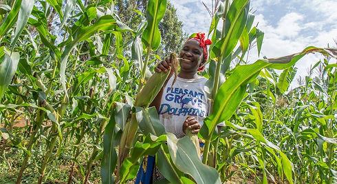 Maize grower Uganda.jpg