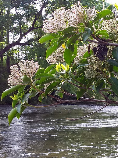 Chattooga Thru the Foliage.jpg