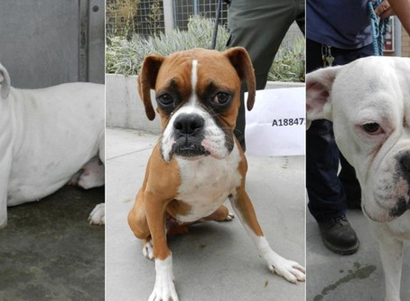 CITY ATTORNEY MIKE FEUER FILES SIX ANIMAL NEGLECT CHARGES