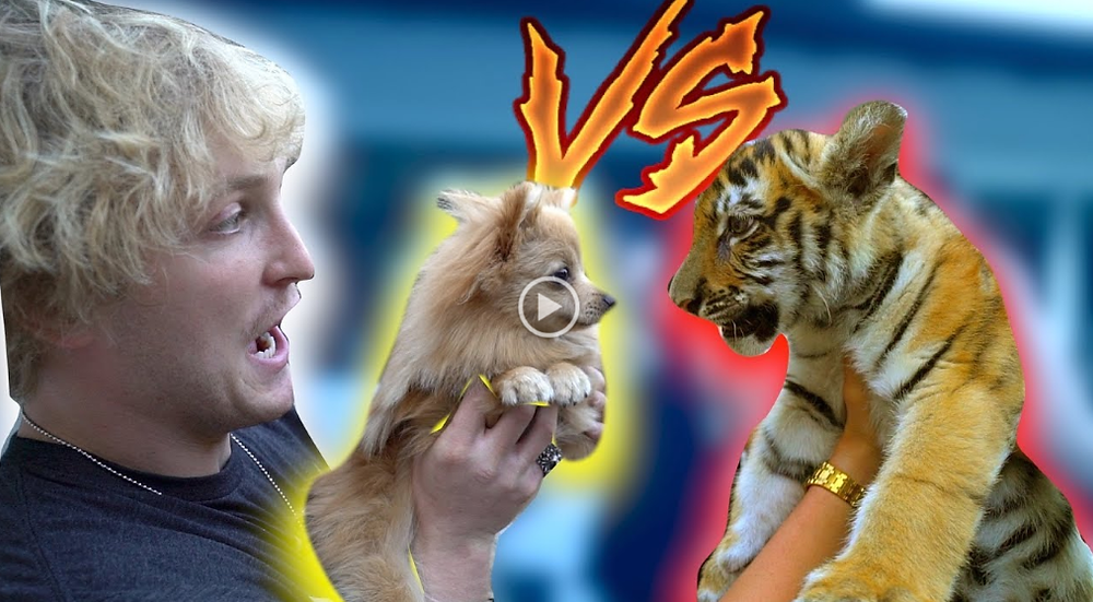Youtube screen shot of Logan Paul holding his dog next to a tiger cub being held by someone else.