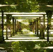 The Infinite Garden.jpg