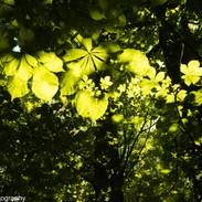 Green Dance.jpg