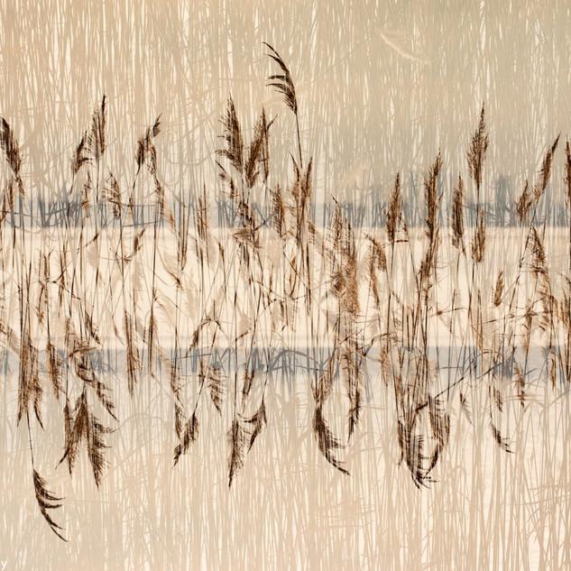 Reed Arrangment
