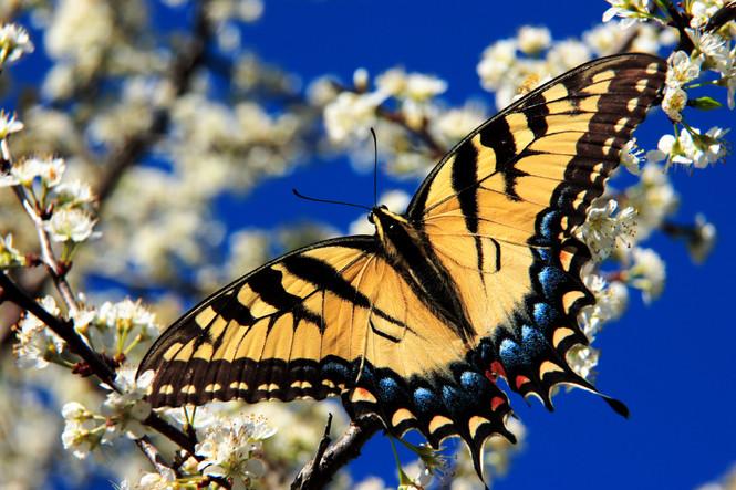 "Butterfly Medicine- ""Transmutation"""