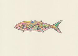 Electric Bluefish