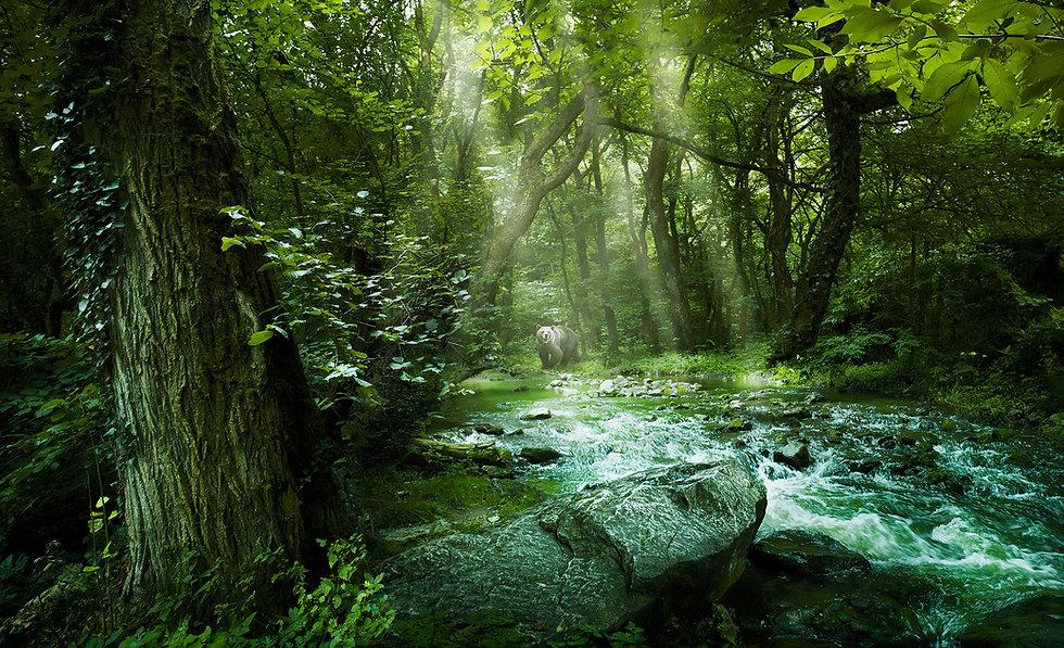 Forest-web.jpg