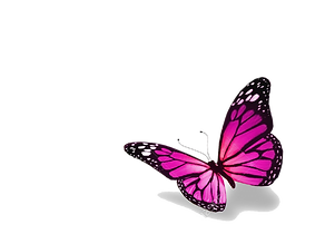 FAVPNG_butterfly-stock-photography-royal
