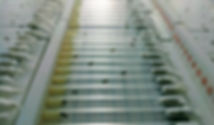 Drosohpila fly trikinetics van Swinderen lab tubes DART