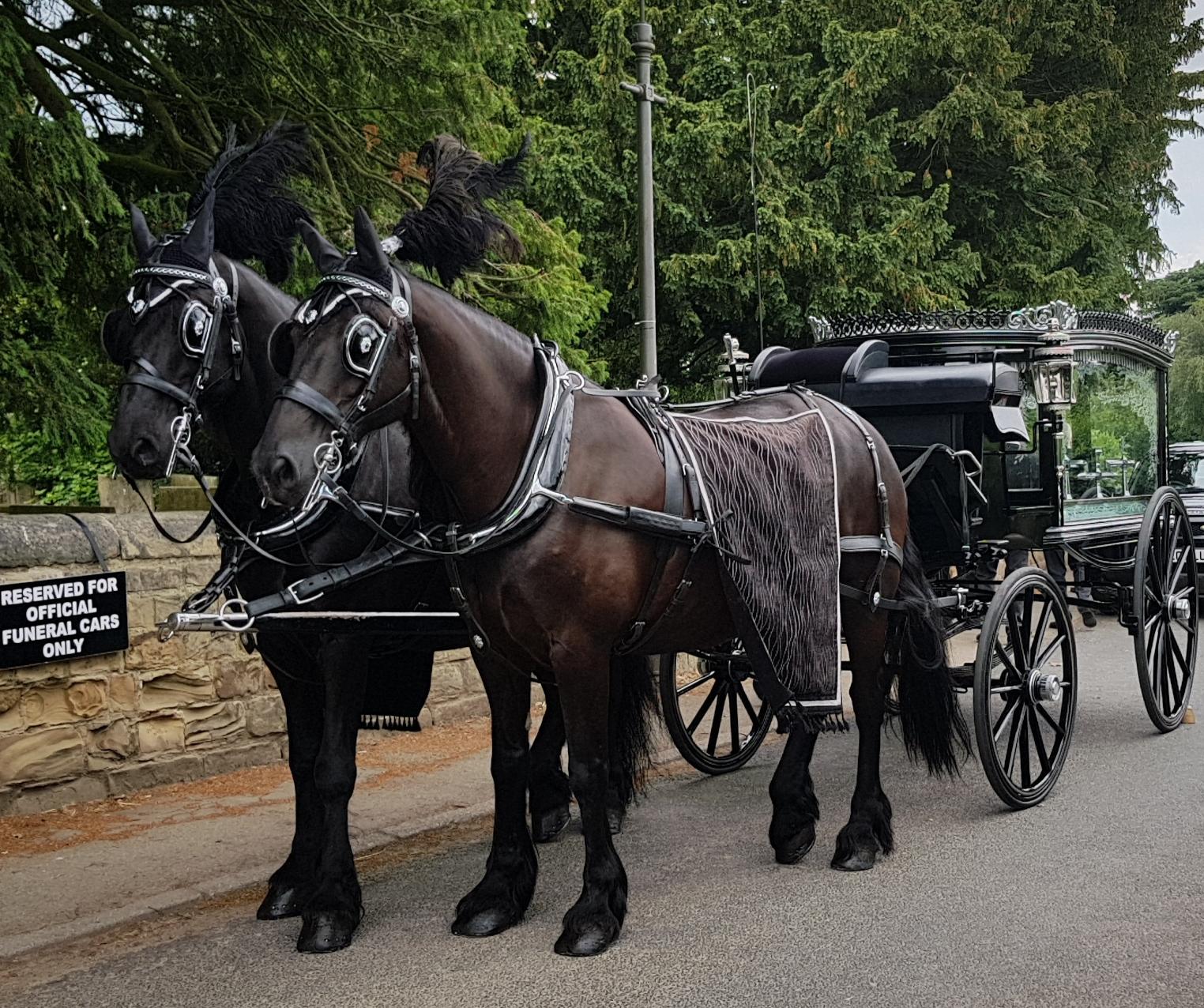 Funeral Horses