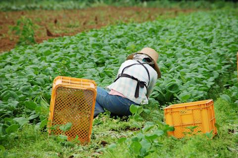 職種追加「農業」