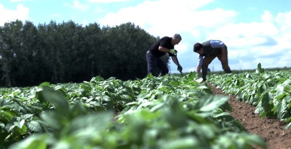 Potato field photo.jpg