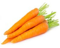 Carrots photo.jpg