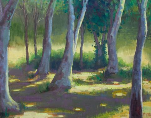 Purple shadows