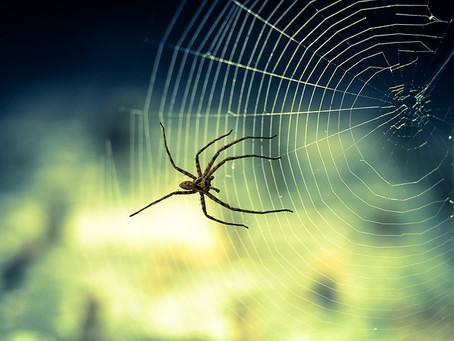 Las 25 fobias más comunes
