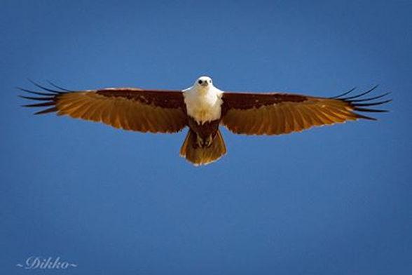 bird 11.jpg
