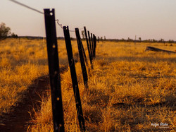 Billabong Fence