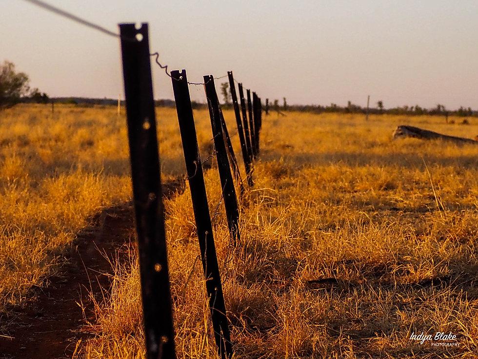 Billabong Fence.jpg