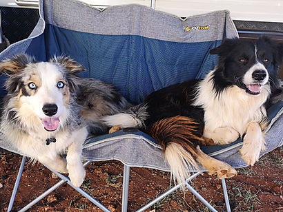dogs camping - thumper and cocoa.jpg