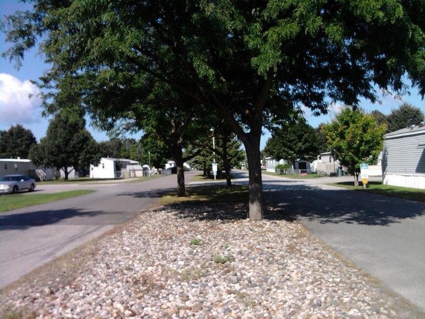 Clover Trees.jpg