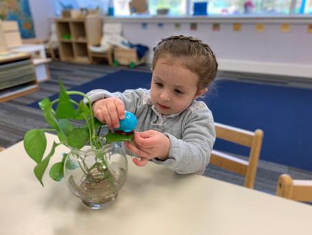Achieving Success in the Montessori Classroom