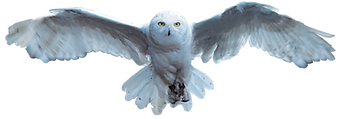 hedwig.png