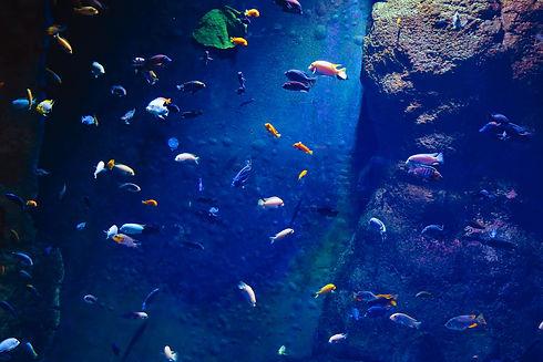 Industries_Aquarium_1.jpg
