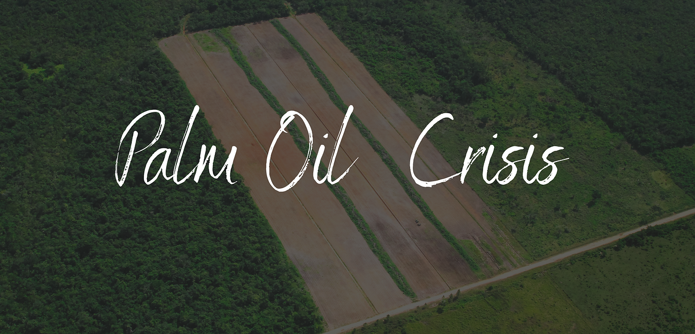 Palm Oil Crisis-2.png