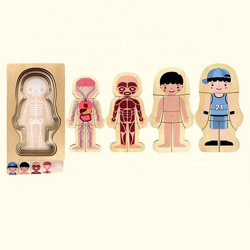 Rompecabezas cuerpo humano multicapas