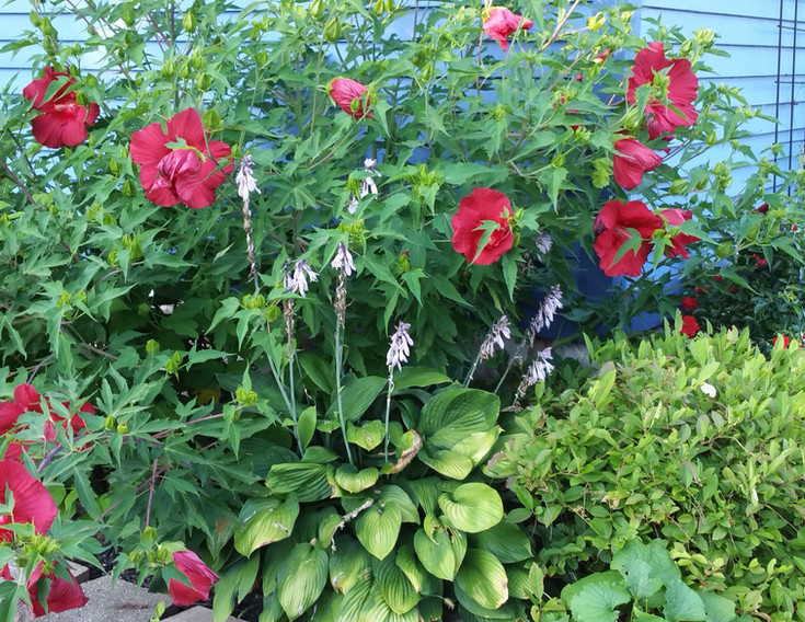 Side garden in late Summer