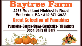 Baytree Farm - Great Selection of Pumpkins