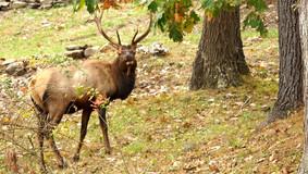 Elk Cam Goes Live