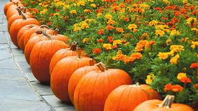 Gardeners Digging Deeper: Fall Garden Seminar
